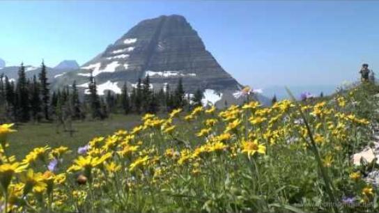 Travel USA: Glacier Nationalpark 2